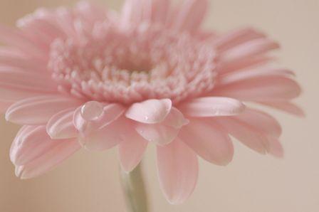 Mot Cle Fleurs Chez Bouboulette Page 2