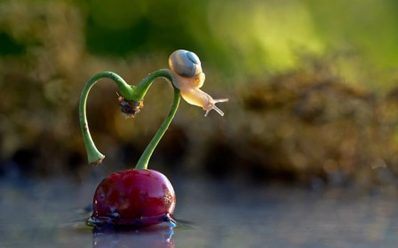 snail-water-small-cute-832-1280x800__880.jpg